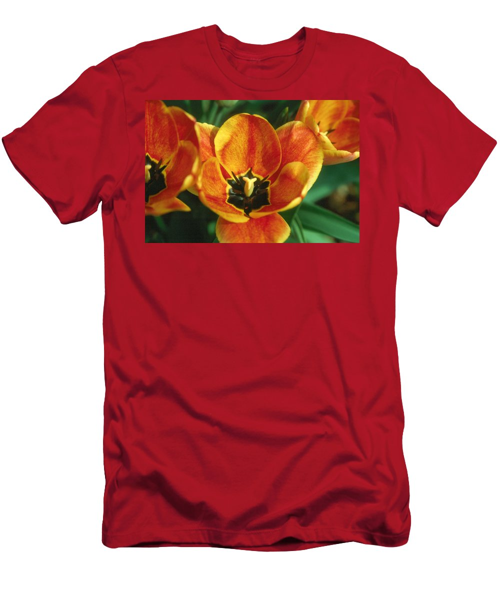 Tulip Men's T-Shirt (Athletic Fit) featuring the photograph Tulip 2 by Andy Shomock