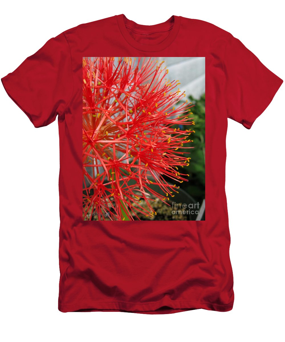 African Blood Lily Men's T-Shirt (Athletic Fit) featuring the photograph African Blood Lily Or Fireball Lily by J McCombie