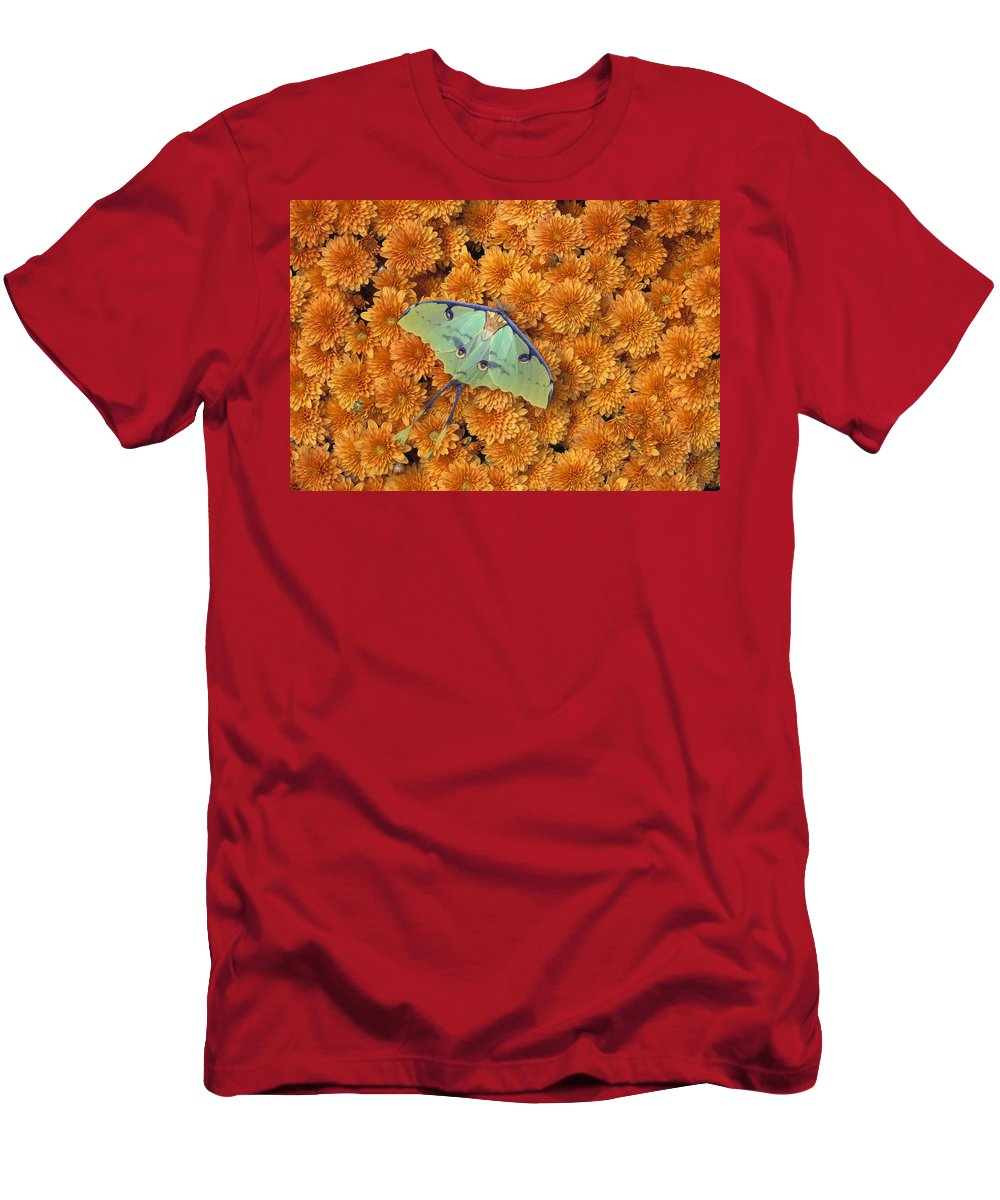 Bugs Men's T-Shirt (Athletic Fit) featuring the photograph Butterfly On Flowers by Natural Selection Jeff Lepore