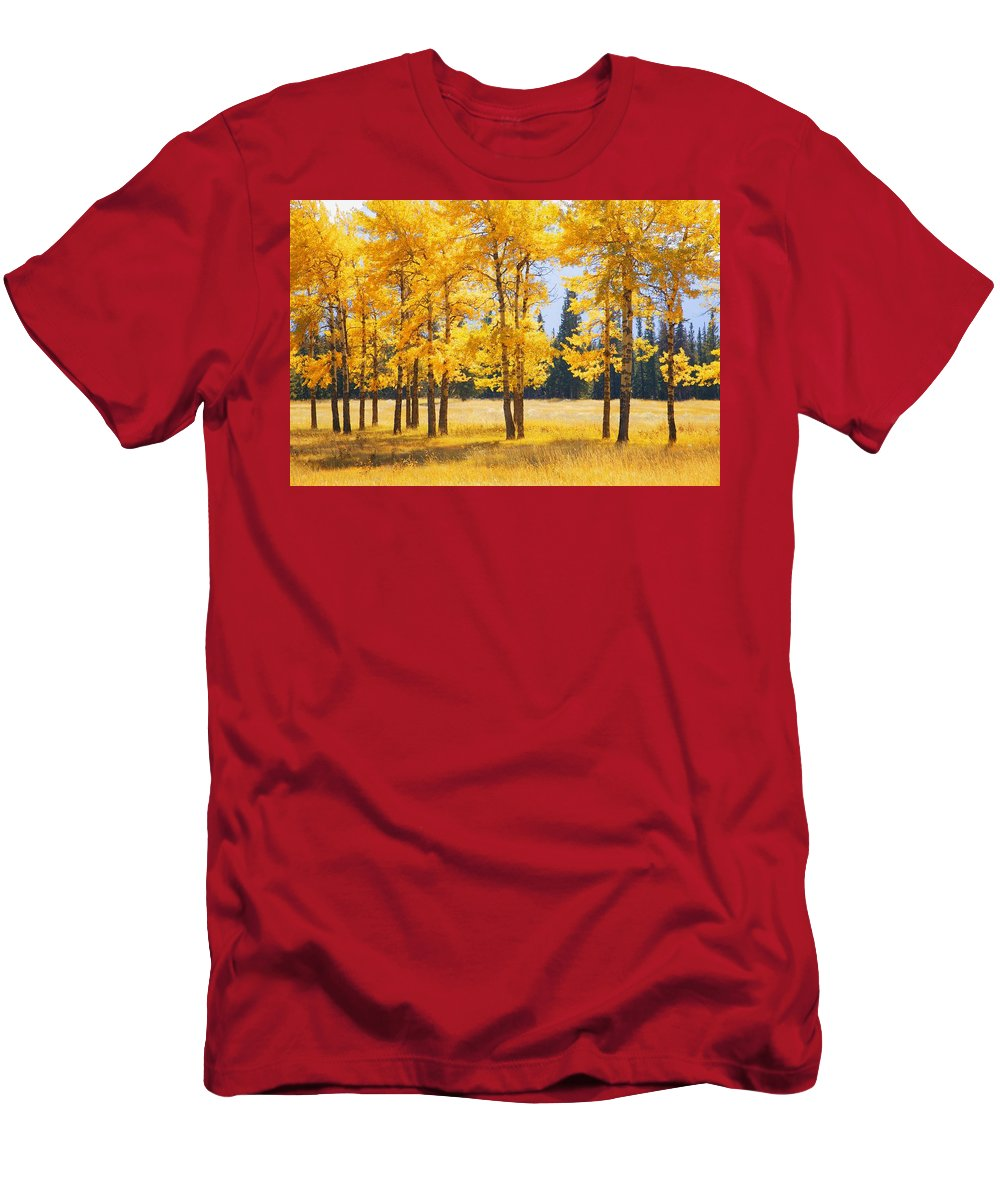 Autumn Colors Men's T-Shirt (Athletic Fit) featuring the photograph Trees In Autumn by Don Hammond