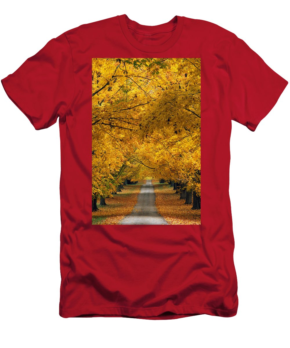 Autumn Colors Men's T-Shirt (Athletic Fit) featuring the photograph Trees In Autumn by Natural Selection Tony Sweet