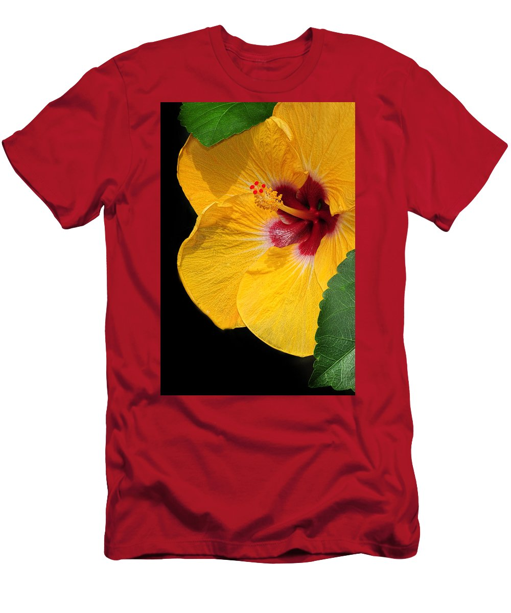 Hibiscus Men's T-Shirt (Athletic Fit) featuring the photograph Yellow Hibiscus by Dave Mills
