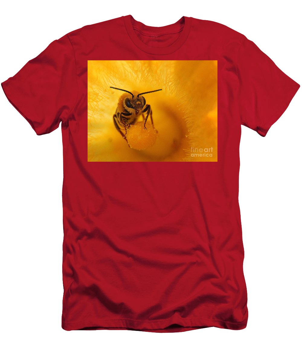 Bee Men's T-Shirt (Athletic Fit) featuring the photograph Bee On Squash Flower by Jack Schultz
