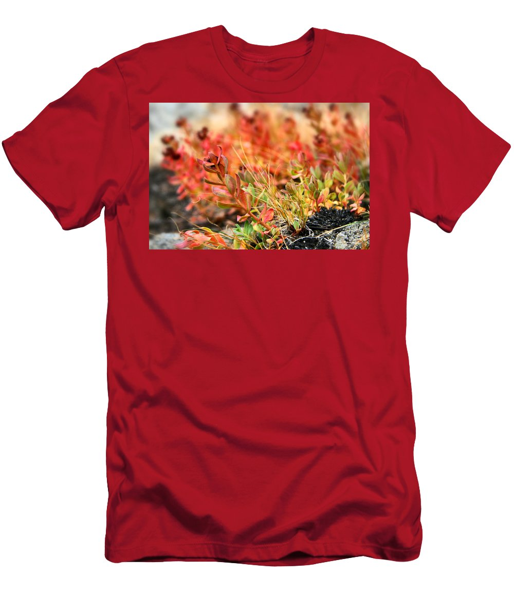 Forest Foliage Men's T-Shirt (Athletic Fit) featuring the photograph Forest Folaige by Chris Brannen