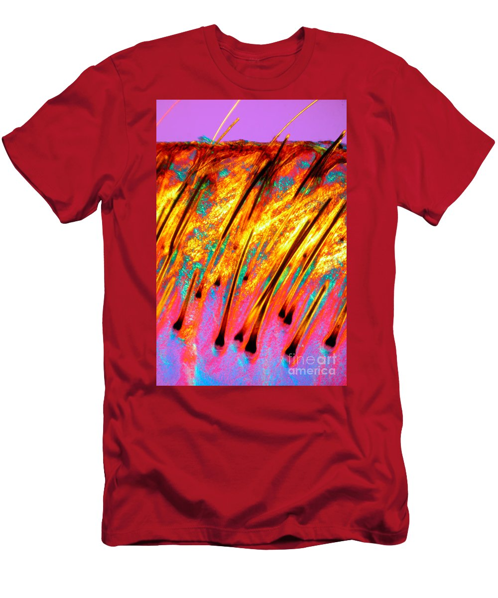 Light Microscopy Men's T-Shirt (Athletic Fit) featuring the photograph Human Scalp by M. I. Walker
