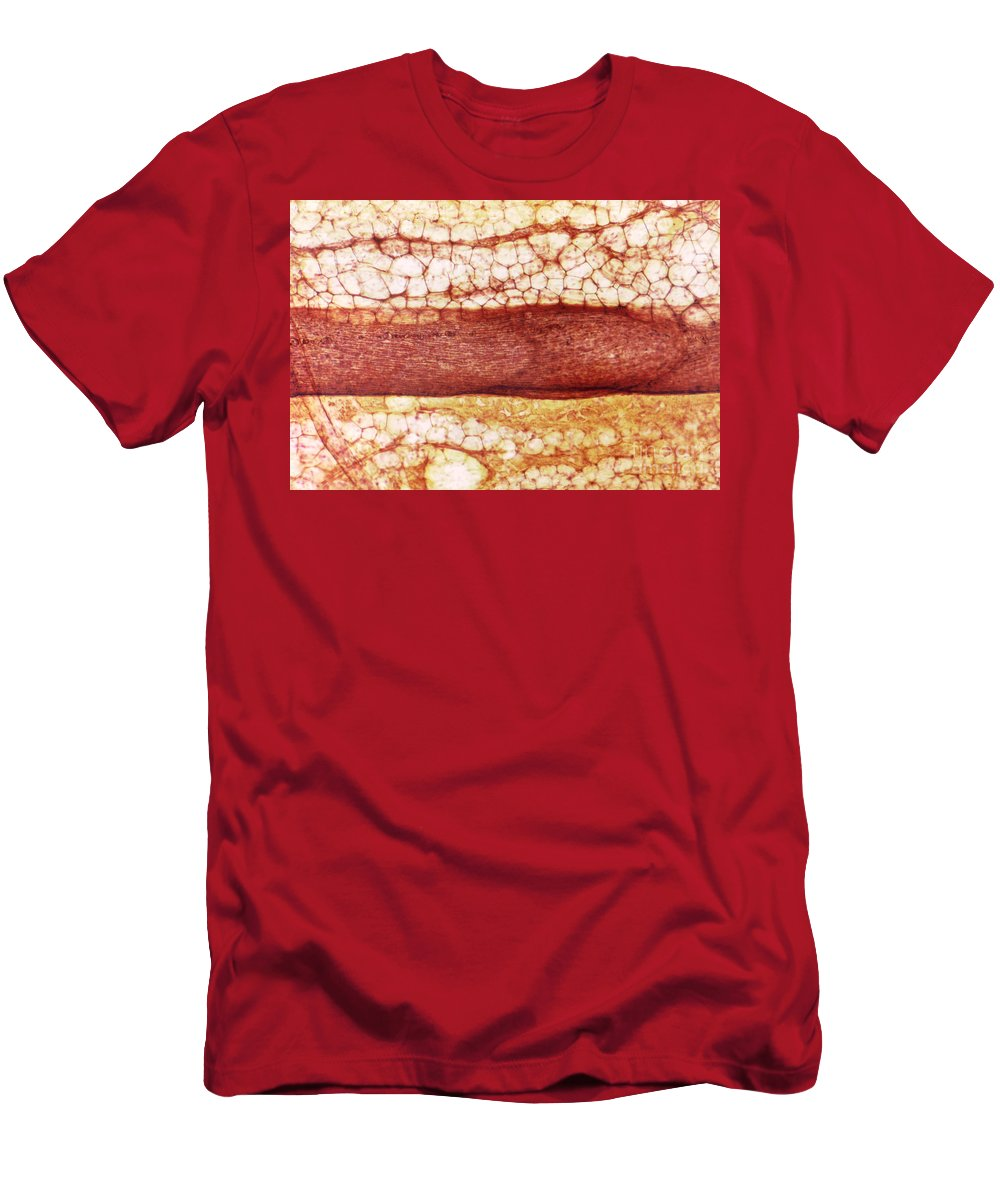 Light Microscopy Men's T-Shirt (Athletic Fit) featuring the photograph Lymph Vessel by M. I. Walker