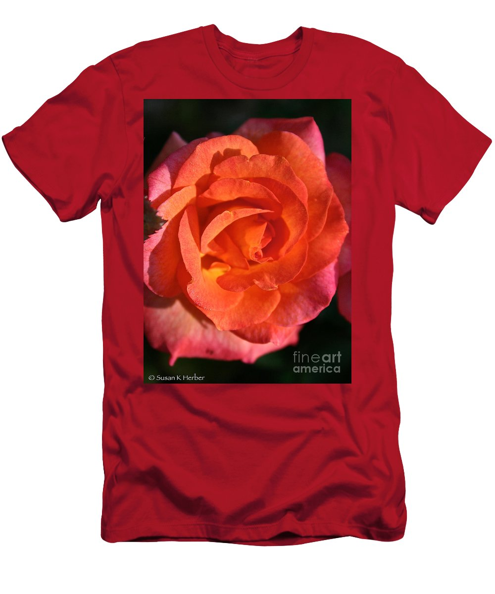 Plant Men's T-Shirt (Athletic Fit) featuring the photograph Sunrise Rose by Susan Herber