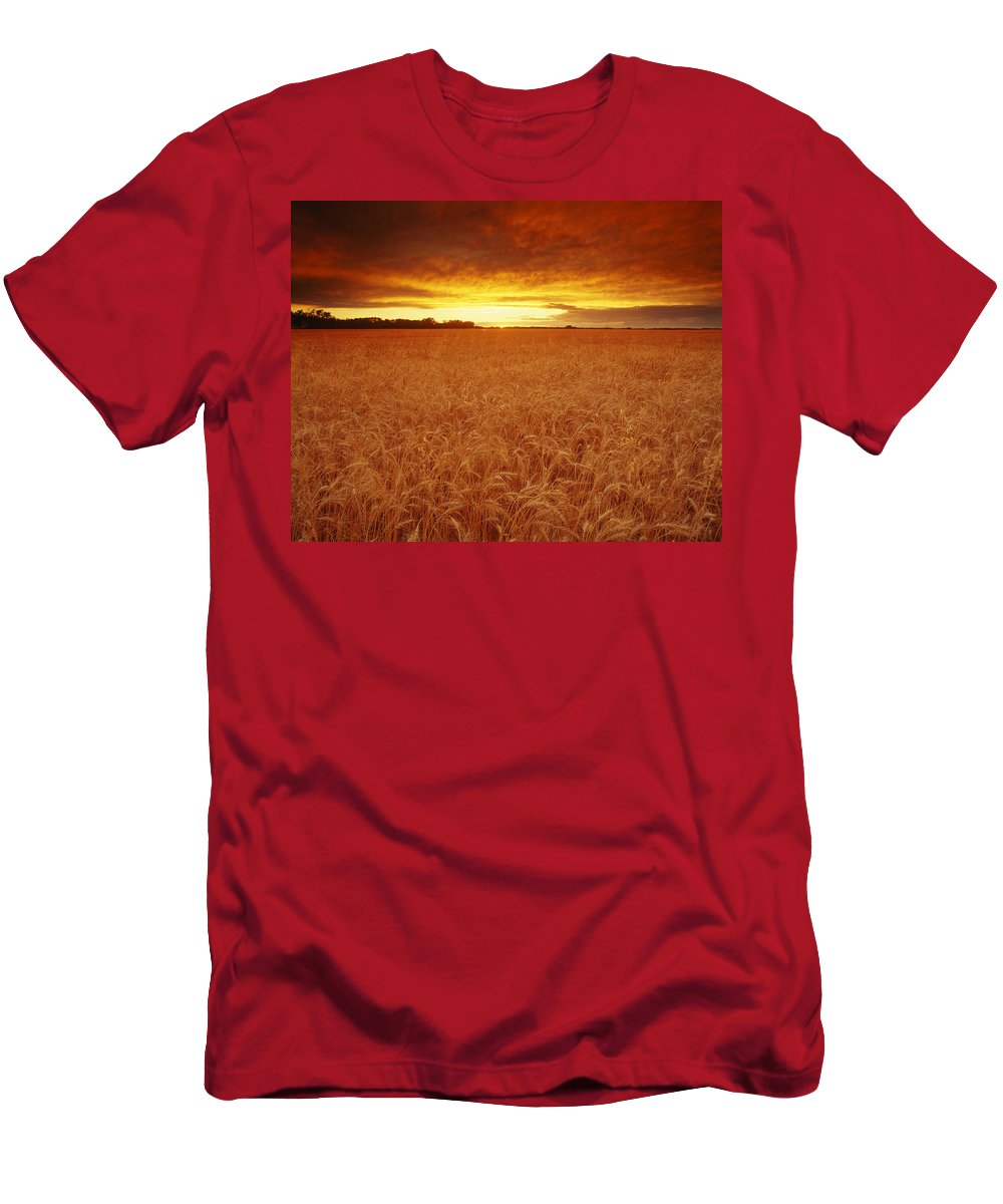 Alberta Men's T-Shirt (Athletic Fit) featuring the photograph Sunset Over Wheat Field by Don Hammond