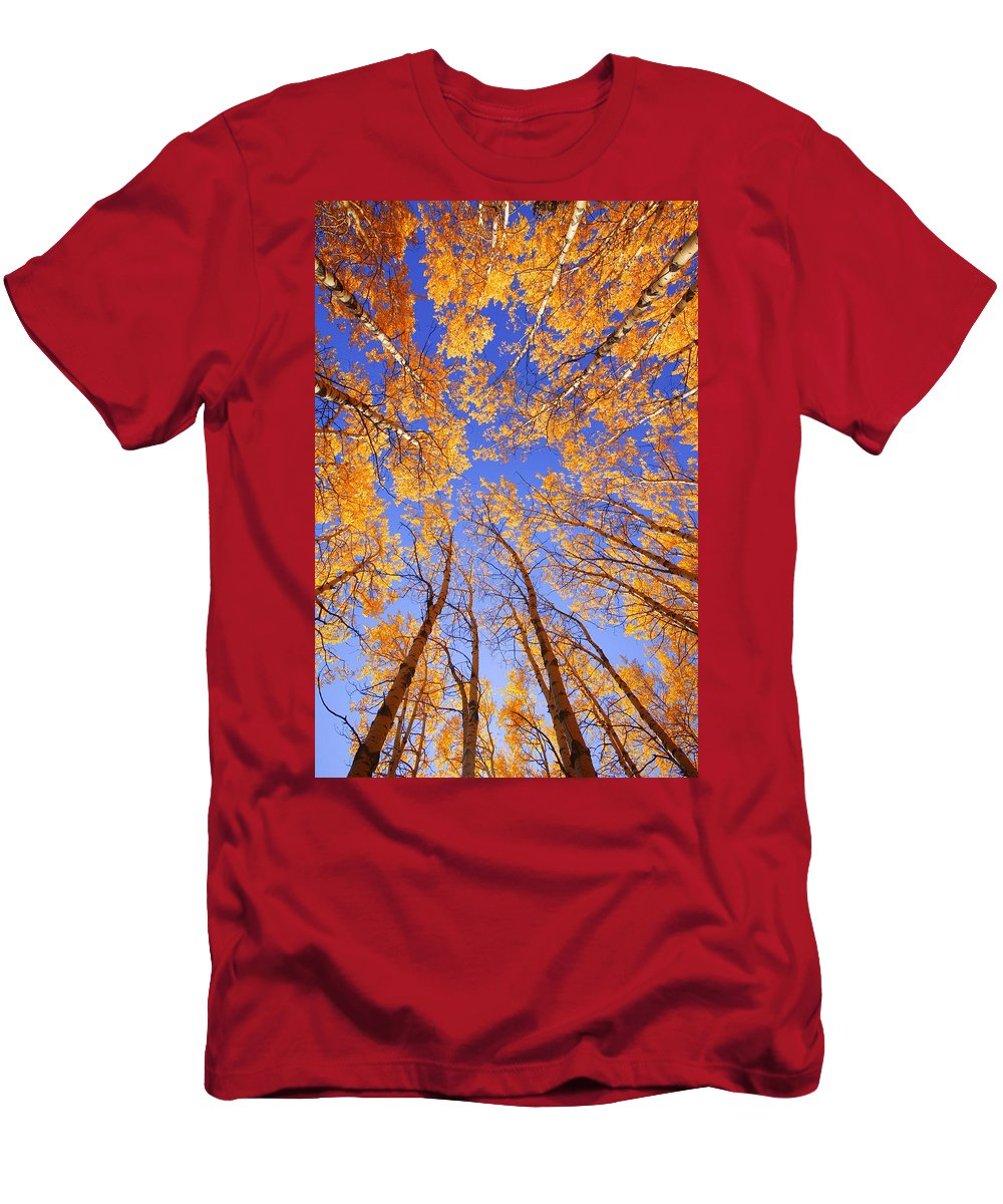 Autumn Colors Men's T-Shirt (Athletic Fit) featuring the photograph Tree Tops by Don Hammond