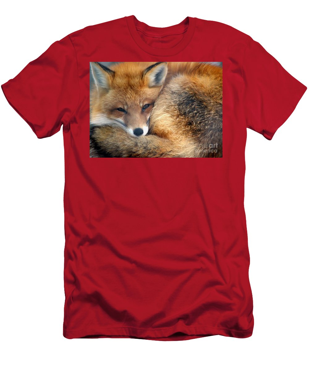 Red Fox Men's T-Shirt (Athletic Fit) featuring the photograph Winter's Chill by Living Color Photography Lorraine Lynch
