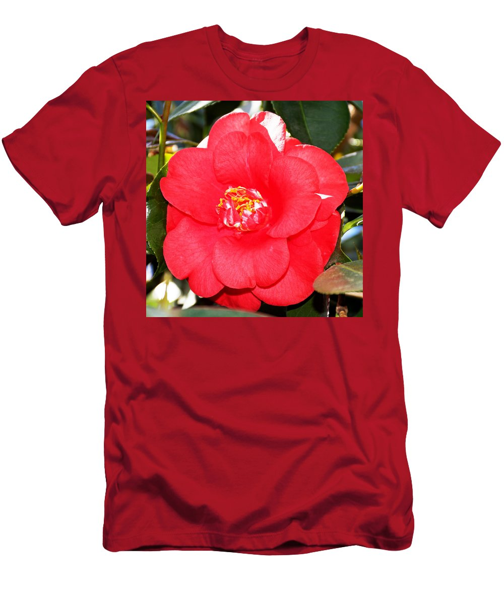Coral Camellia At Pilgrim Place In Claremont Men's T-Shirt (Athletic Fit) featuring the photograph Coral Camellia At Pilgrim Place In Claremont-california by Ruth Hager