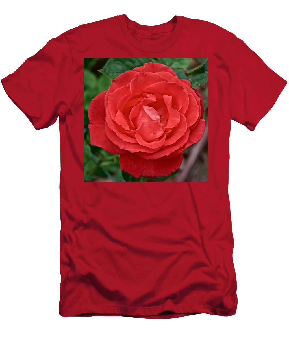 Coral Rose At Pilgrim Place In Claremont Men's T-Shirt (Athletic Fit) featuring the photograph Coral Rose At Pilgrim Place In Claremont-california by Ruth Hager