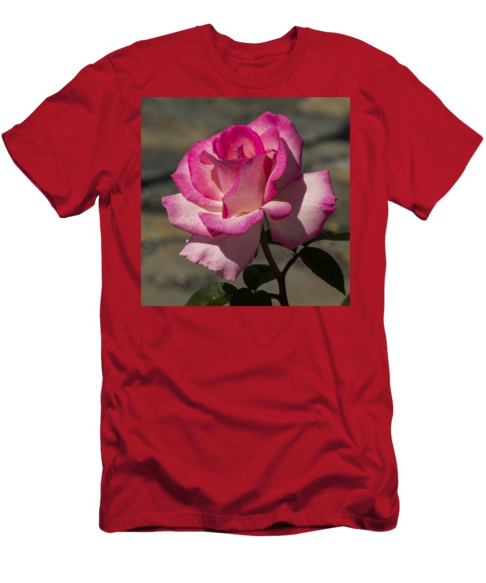 Flowers Men's T-Shirt (Athletic Fit) featuring the photograph An April Rose by Bruce Frye