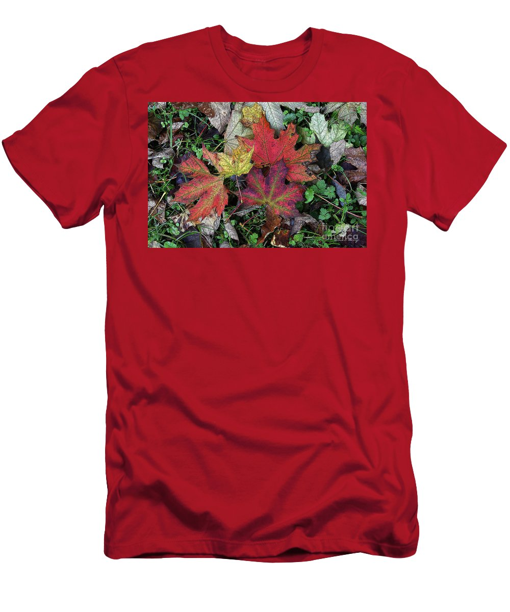 Diane Berry Men's T-Shirt (Athletic Fit) featuring the drawing Autumn Colors by Diane E Berry