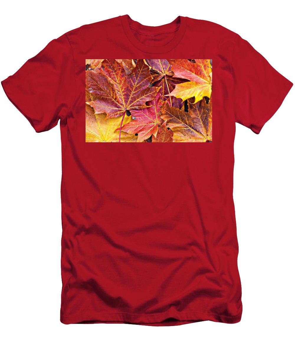 Autumn Men's T-Shirt (Athletic Fit) featuring the photograph Autumnal Carpet by Meirion Matthias