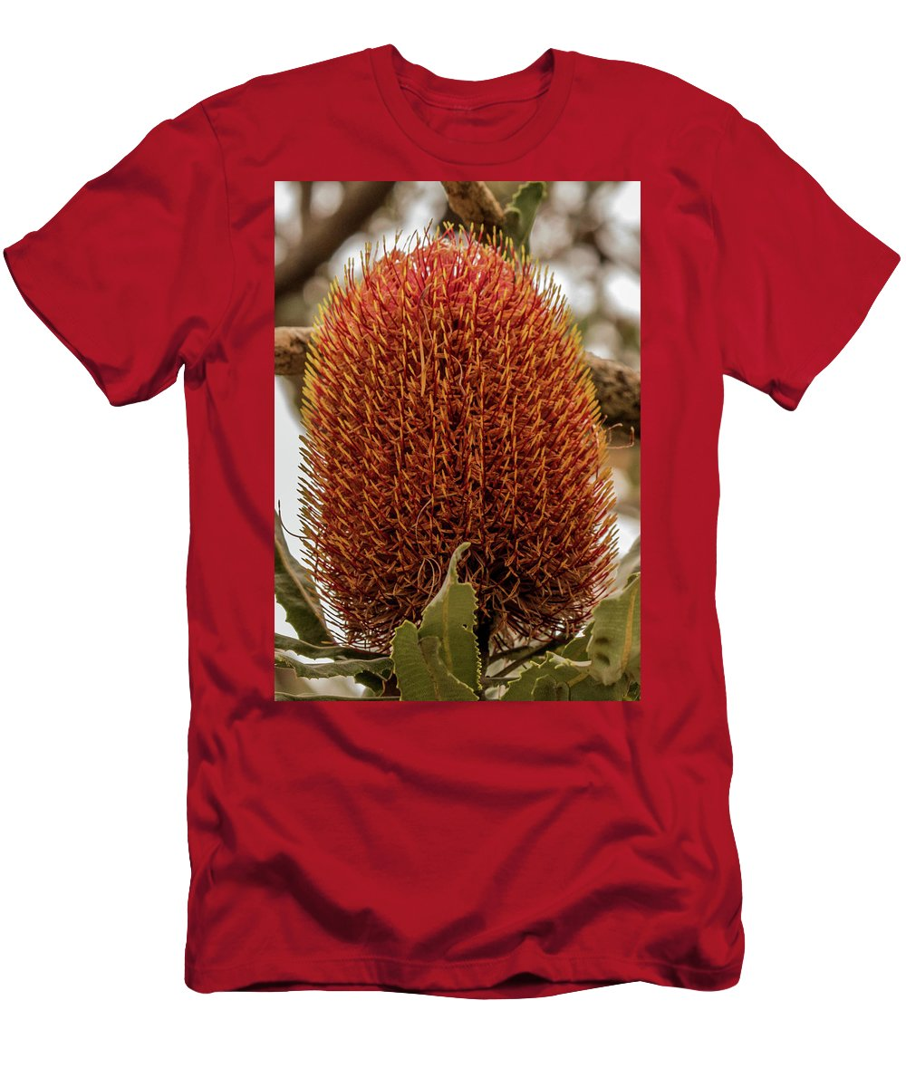 Banksia Men's T-Shirt (Athletic Fit) featuring the photograph Banksia Serrata 2 by Tania Read
