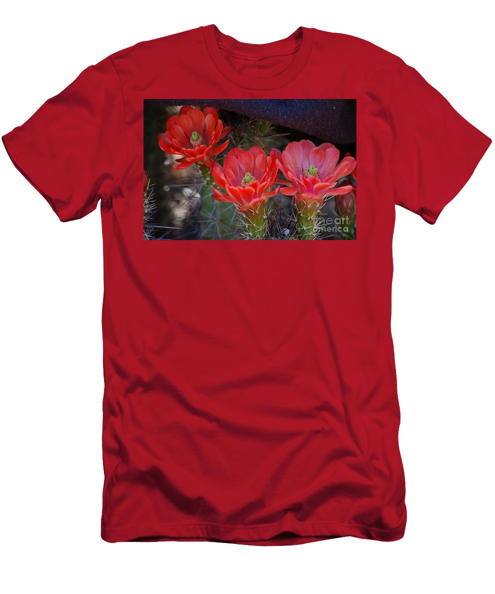 Red Flowers Men's T-Shirt (Athletic Fit) featuring the photograph Cactus Flowers by Frank Stallone