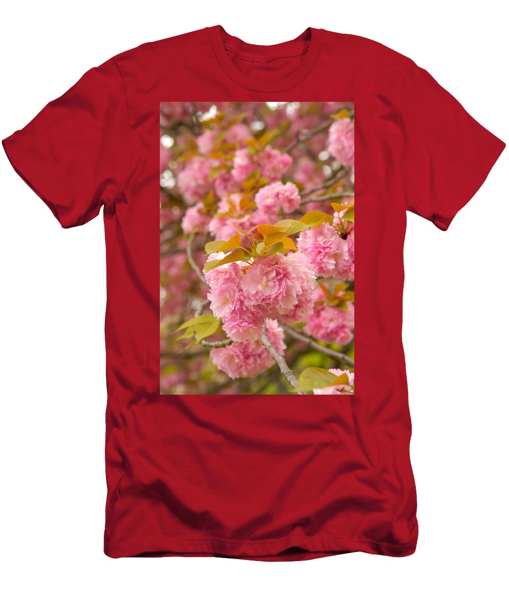Cherry Men's T-Shirt (Athletic Fit) featuring the photograph Cherry Blossom by Sebastian Musial