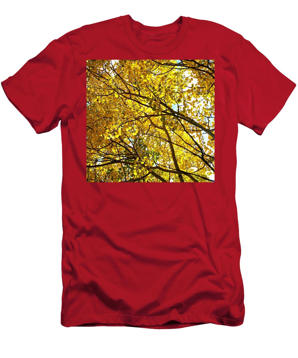 Aspen Men's T-Shirt (Athletic Fit) featuring the photograph Colorado Aspens In Fall by Amy McDaniel