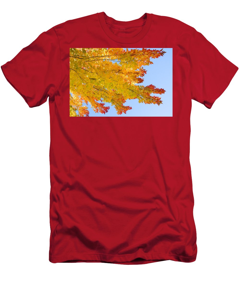 Branches Men's T-Shirt (Athletic Fit) featuring the photograph Colorful Autumn Reaching Out by James BO Insogna