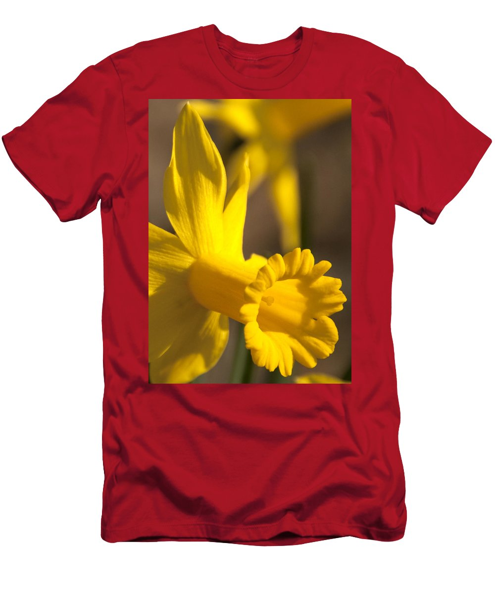 Daffodil Men's T-Shirt (Athletic Fit) featuring the photograph Daffodil Yellow by Steven Natanson