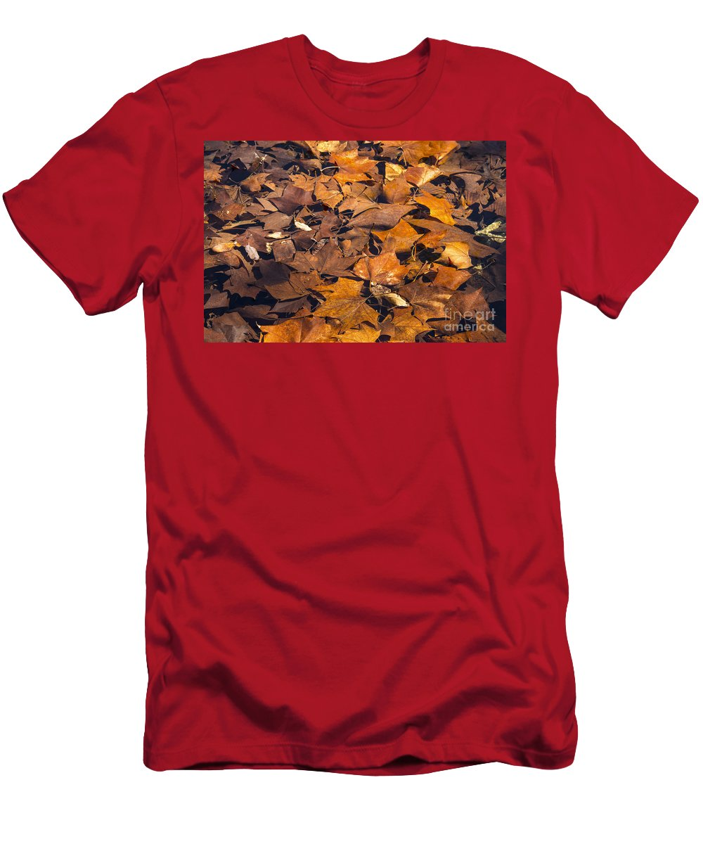 Lost Maples State Natural Area Men's T-Shirt (Athletic Fit) featuring the photograph Dried Leaves by Bob Phillips