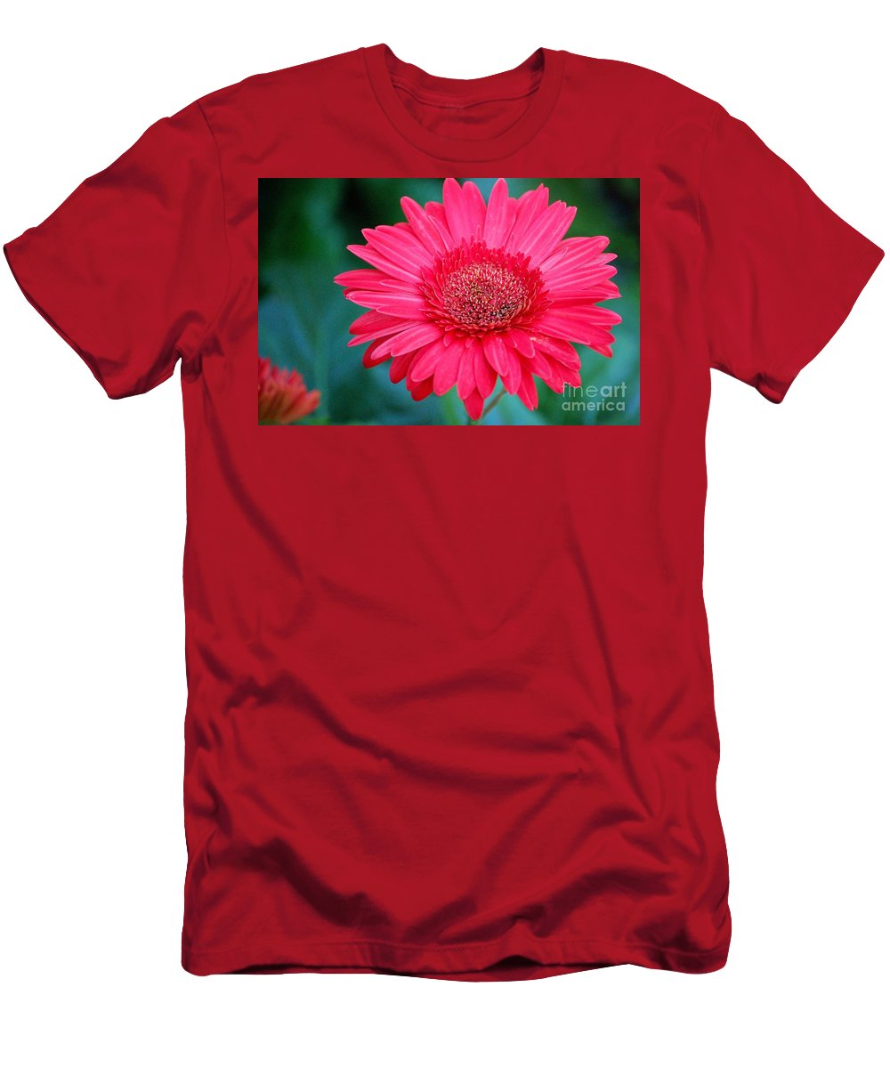 Gerber Daisy Men's T-Shirt (Athletic Fit) featuring the photograph In The Pink by Debbi Granruth