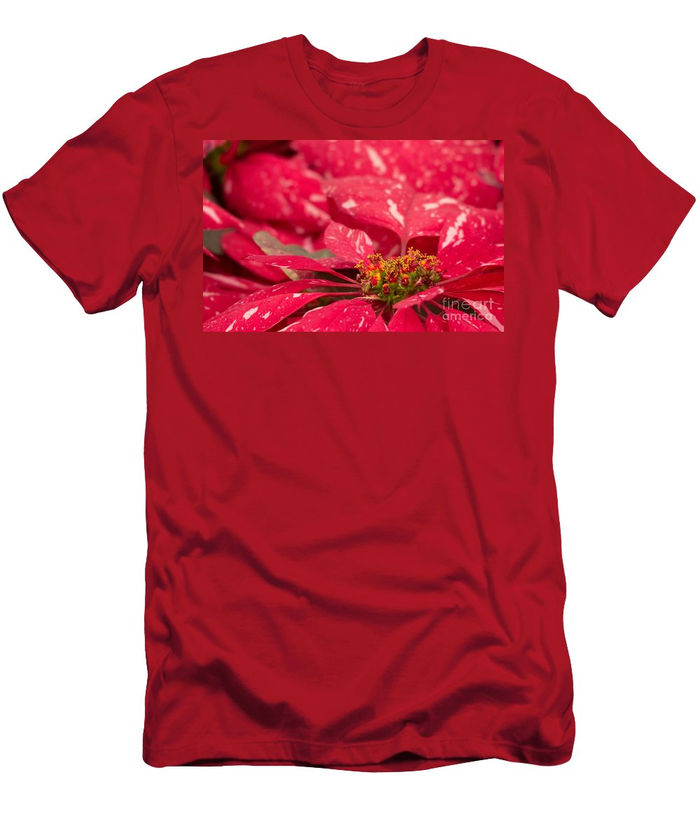 Jingle Bells 3 Poinsettia Men's T-Shirt (Athletic Fit) featuring the photograph Jingle Bells 3 Poinsettia by Marta Robin Gaughen