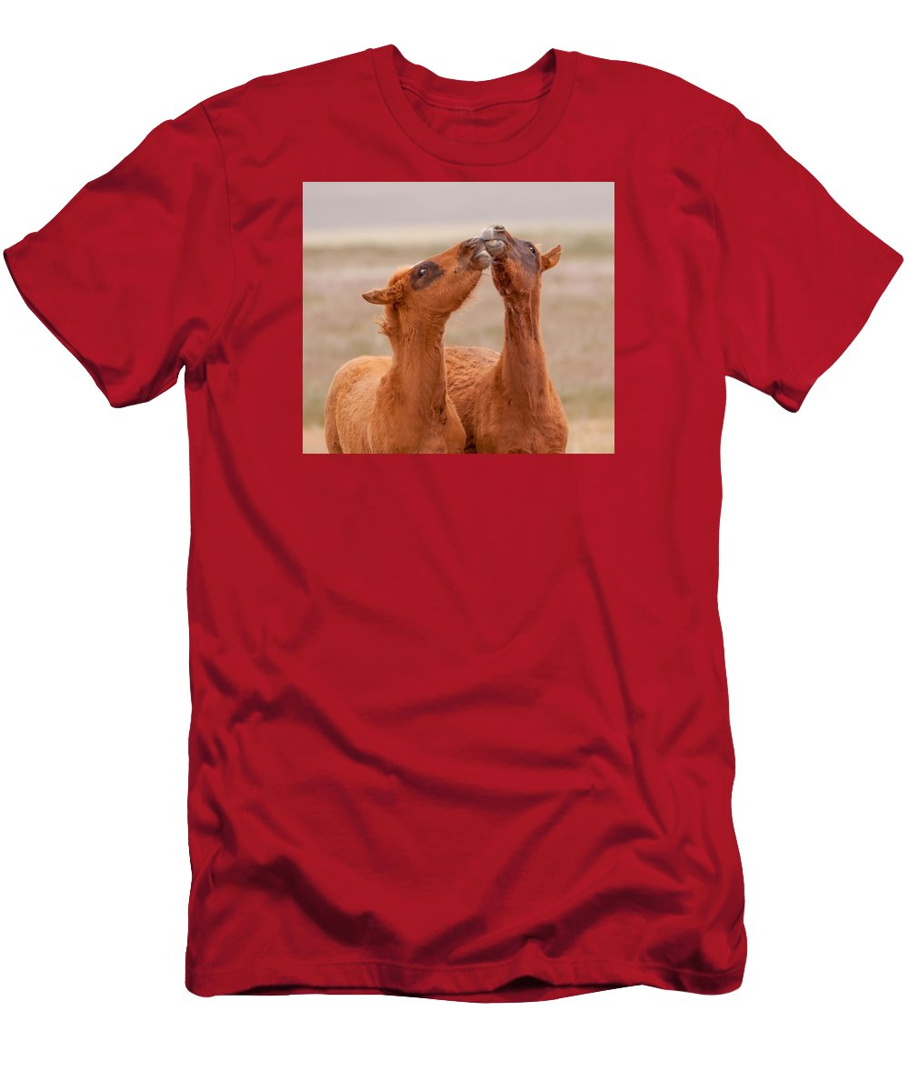 Wild Horse Men's T-Shirt (Athletic Fit) featuring the photograph Kissing Bandits by Kent Keller