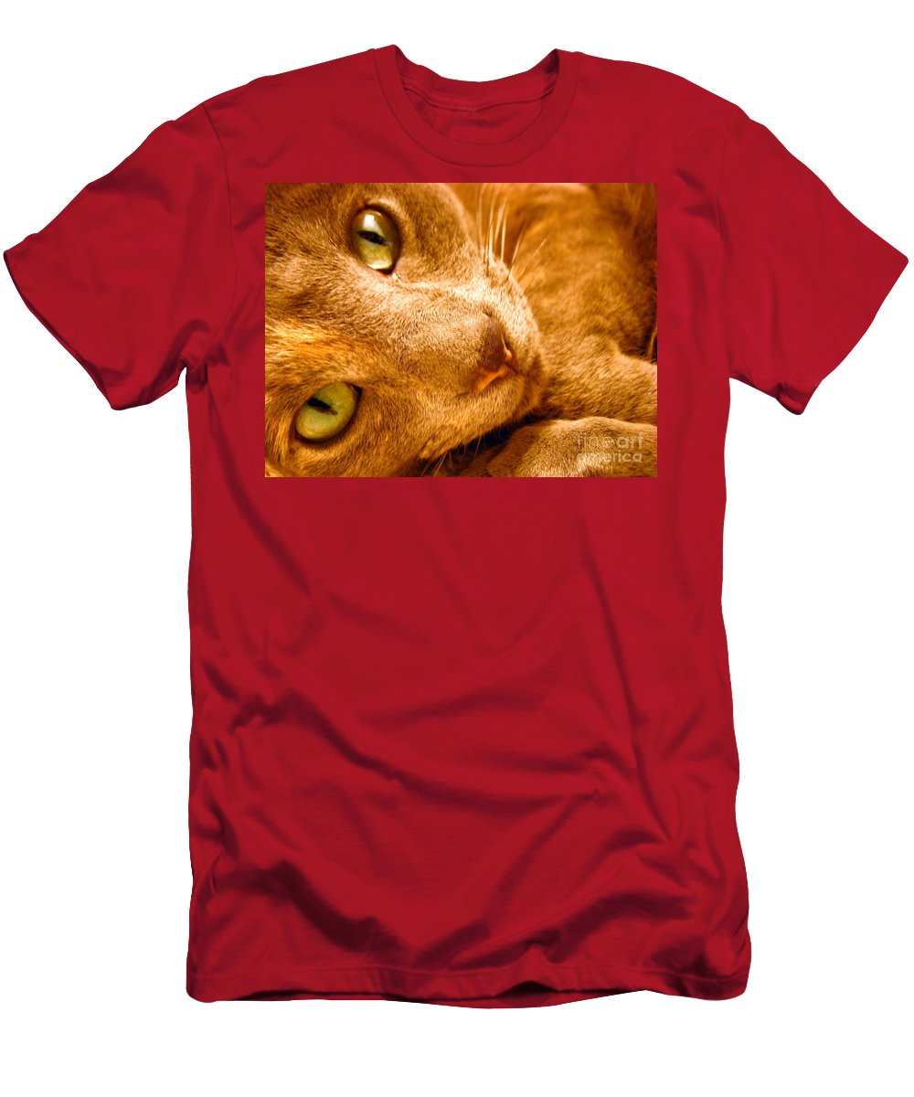 Cats Men's T-Shirt (Athletic Fit) featuring the photograph Kitty by Amanda Barcon