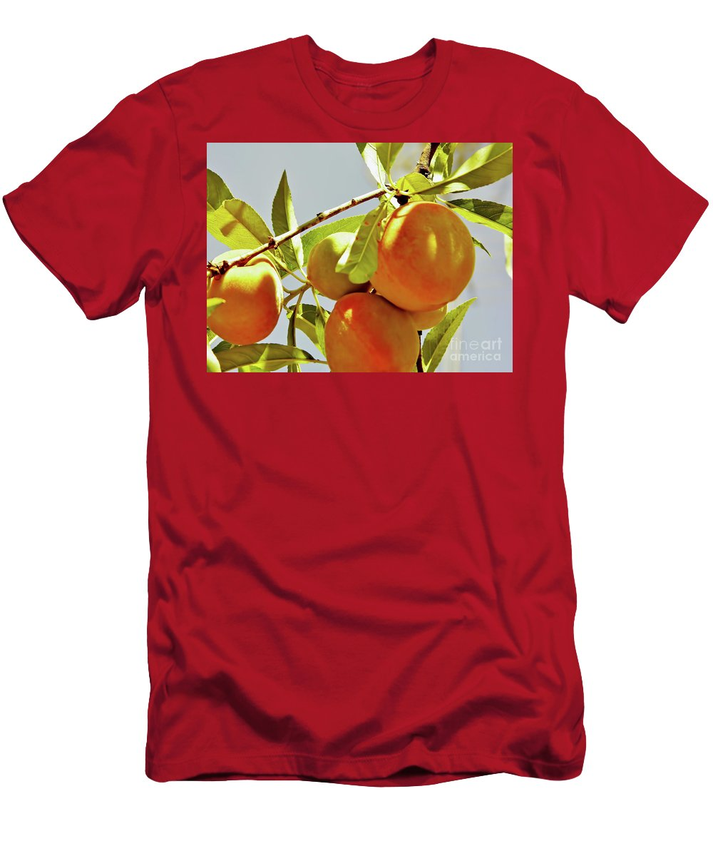 Peach Men's T-Shirt (Athletic Fit) featuring the photograph Peaches On The Tree by D Hackett