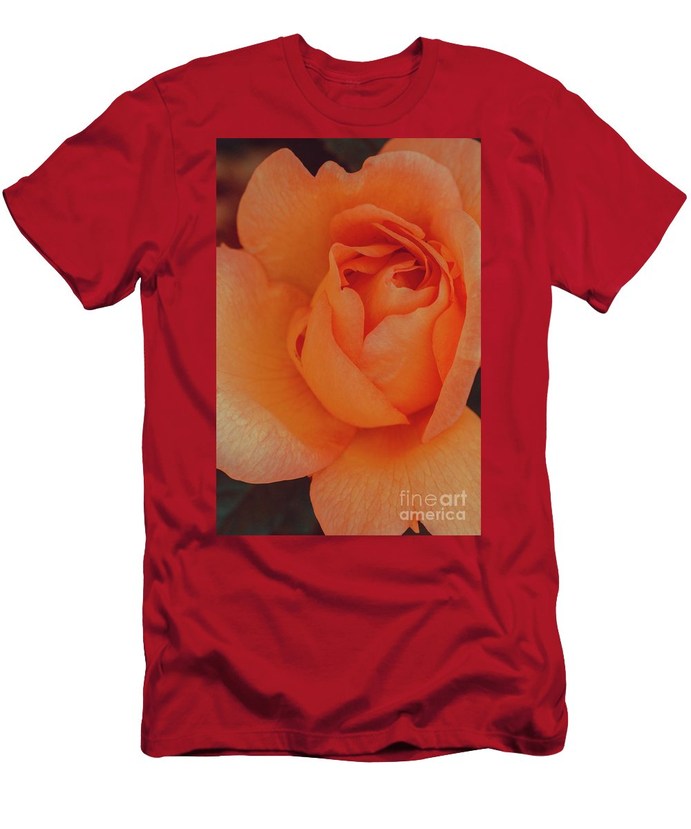 Rose Men's T-Shirt (Athletic Fit) featuring the photograph Peachy by Marc Daly