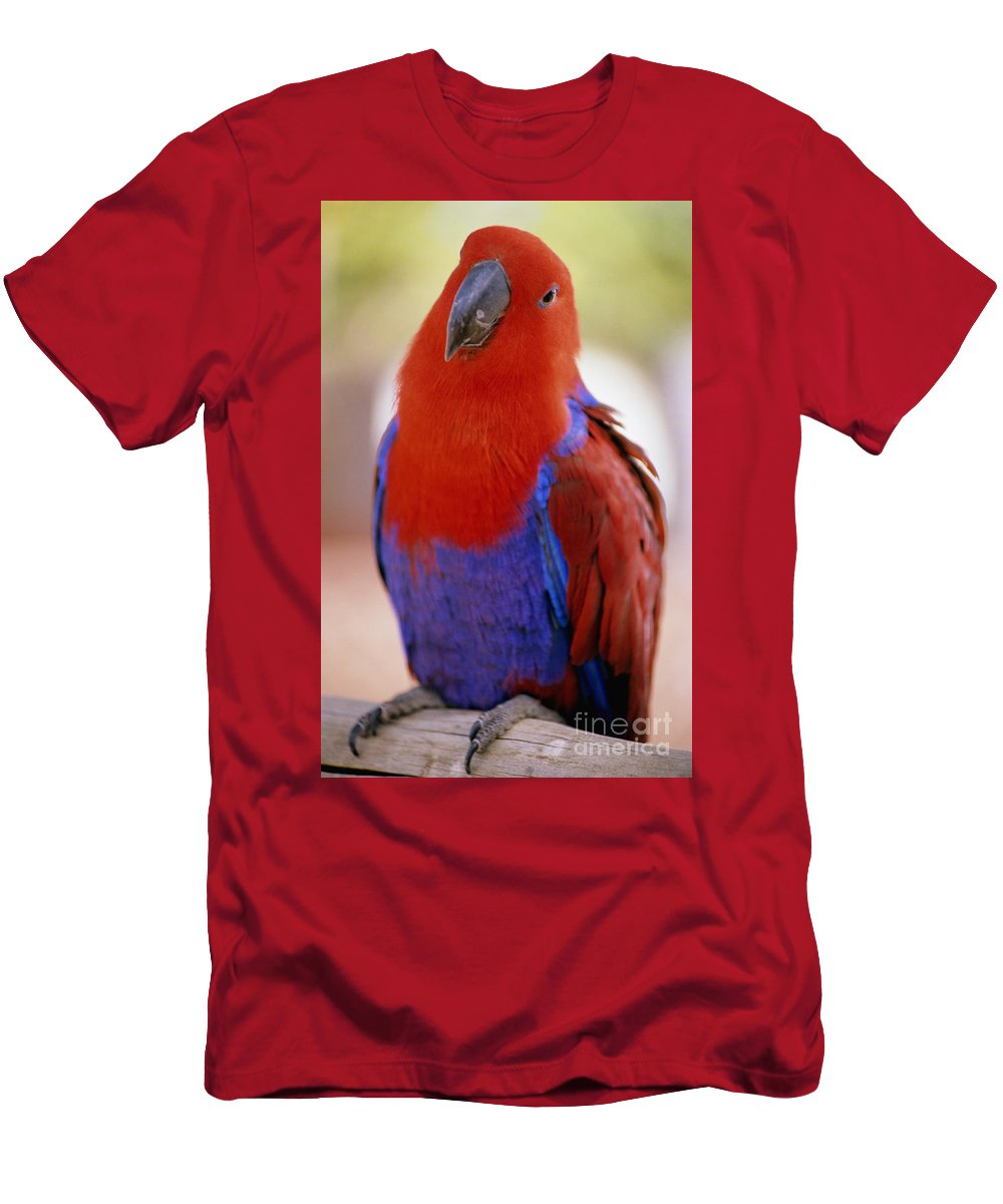 Allan Seiden Men's T-Shirt (Athletic Fit) featuring the photograph Red Blue Macaw by Allan Seiden - Printscapes