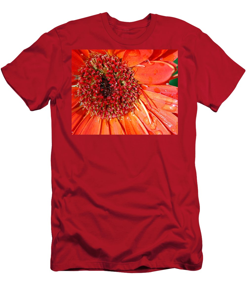 Gerber Daisy Men's T-Shirt (Athletic Fit) featuring the photograph Red Gerbera Daisy by Amy Fose