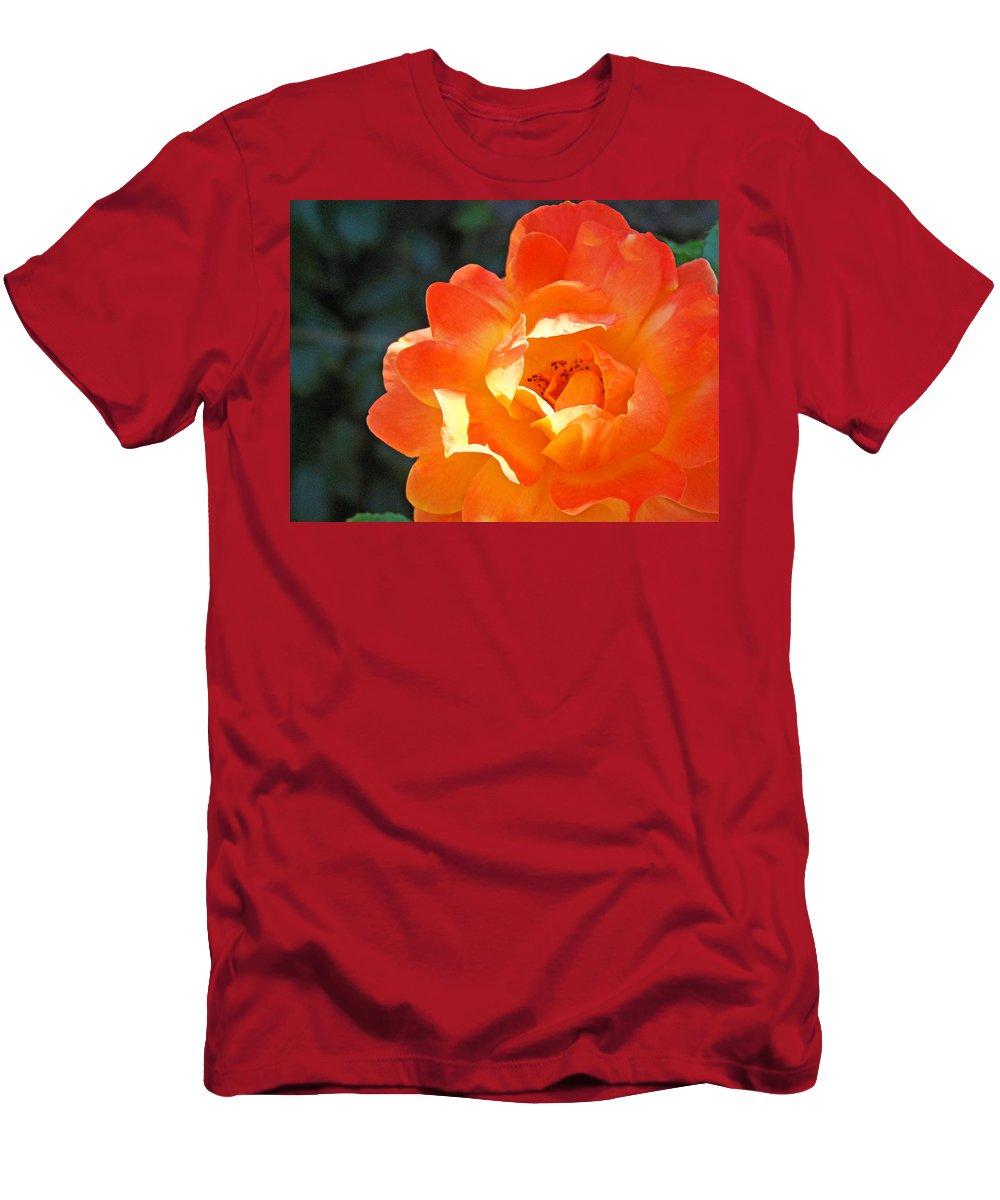Rose T-Shirt featuring the photograph Rose Flower Garden Orange Roses art prints Baslee by Patti Baslee