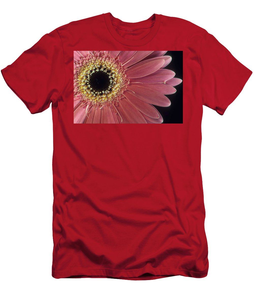 Salmon Gerber Daisy Men's T-Shirt (Athletic Fit) featuring the photograph Salmon Gerber Daisy by Laurie Paci