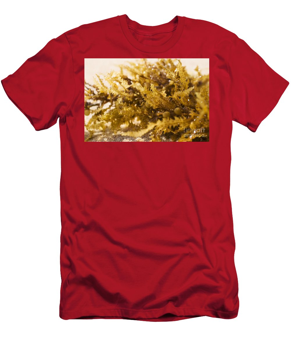 Afternoon Men's T-Shirt (Athletic Fit) featuring the photograph Seaweed In The Sand by Tomas del Amo - Printscapes