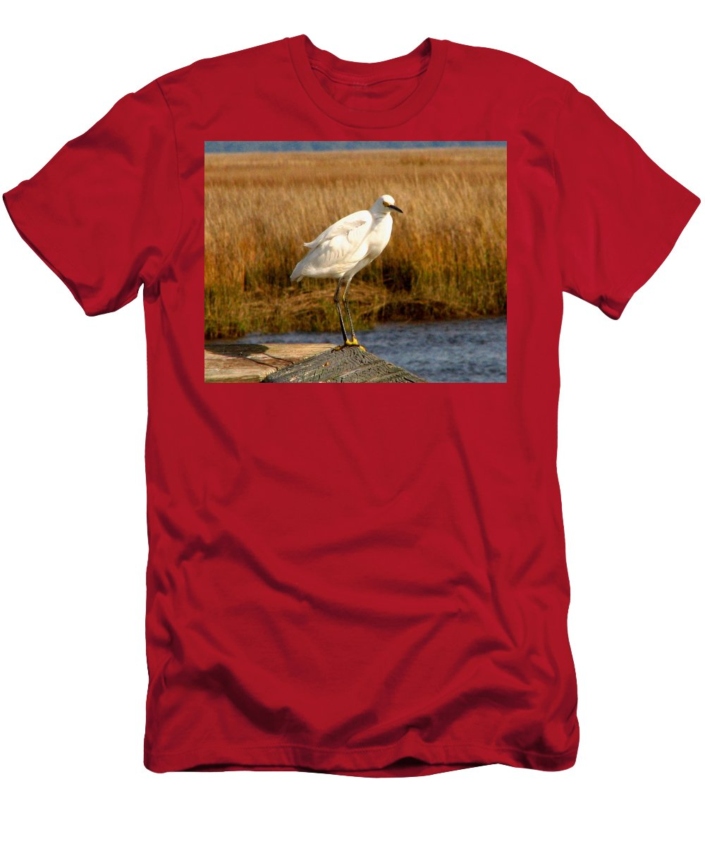 Bird Egret snowy Egret white Egret Seabird Animals Nature Wildlife Men's T-Shirt (Athletic Fit) featuring the photograph Snowy Egret 3 by J M Farris Photography
