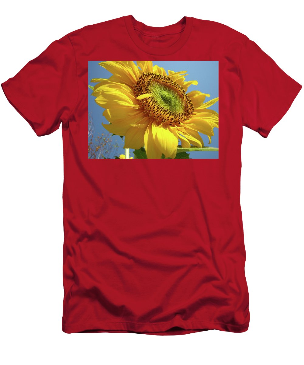 Sunflower Men's T-Shirt (Athletic Fit) featuring the photograph Sunflower Sunlit Sun Flowers 6 Blue Sky Giclee Art Prints Baslee Troutman by Baslee Troutman