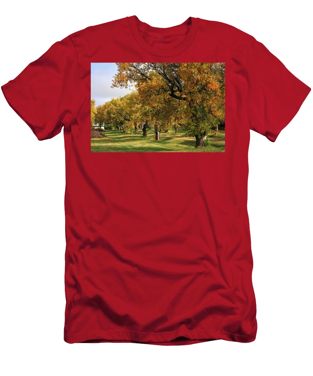 Autumn Fall Colours Colors Winter Red Yellow Red Orange Blue Harvest Evening The End Over This Before Winter Awakening Fall Colours Fall Color Summers End Pumpkins Halloween Leaves Gourds Fall Avenue Men's T-Shirt (Athletic Fit) featuring the photograph Fall Ave by David Matthews