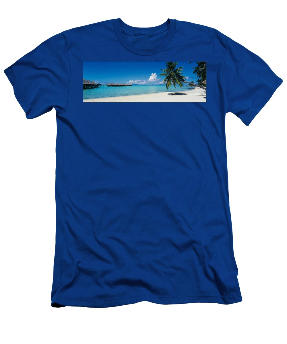 Photography Men's T-Shirt (Athletic Fit) featuring the photograph Palm Tree On The Beach, Moana Beach by Panoramic Images