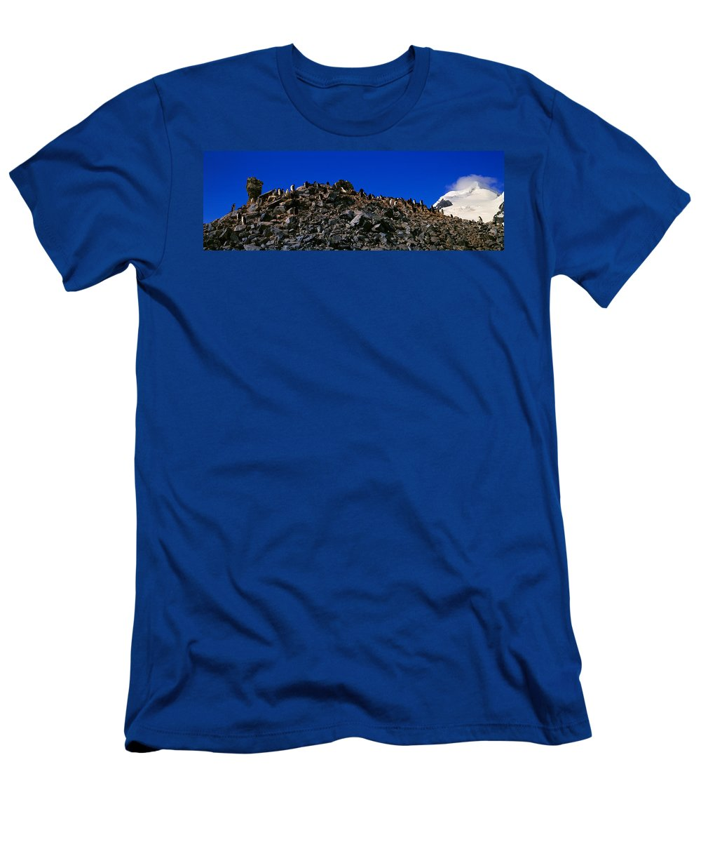Photography T-Shirt featuring the photograph Panoramic View Of Chinstrap Penguins by Panoramic Images