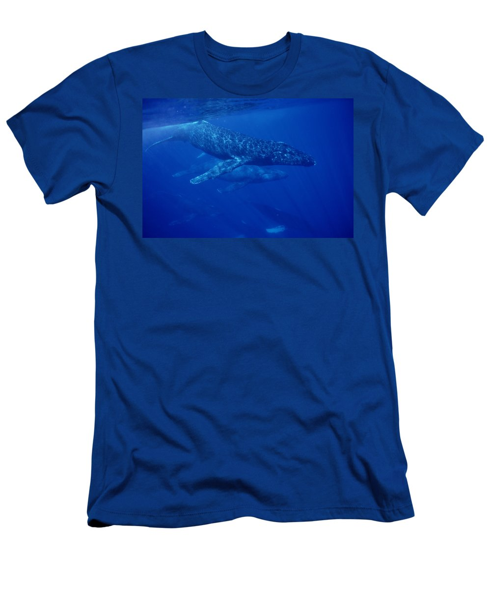 Feb0514 Men's T-Shirt (Athletic Fit) featuring the photograph Humpback Whale Traveling Group Maui by Flip Nicklin
