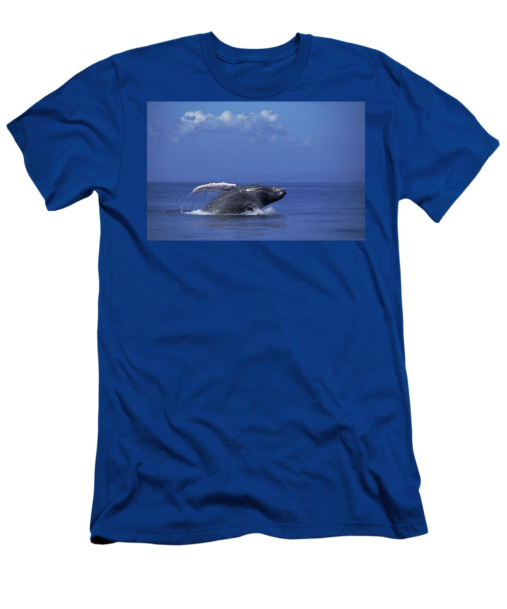 Feb0514 Men's T-Shirt (Athletic Fit) featuring the photograph Humpback Whale Breaching Maui Hawaii by Flip Nicklin