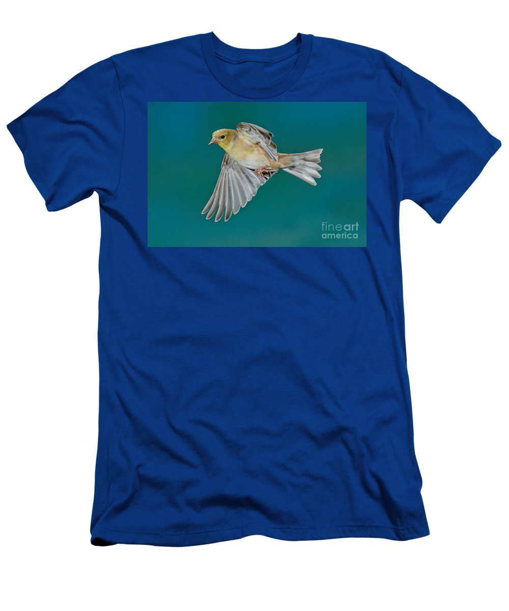 Carduelis Tristis Men's T-Shirt (Athletic Fit) featuring the photograph American Goldfinch Hen In Flight by Anthony Mercieca