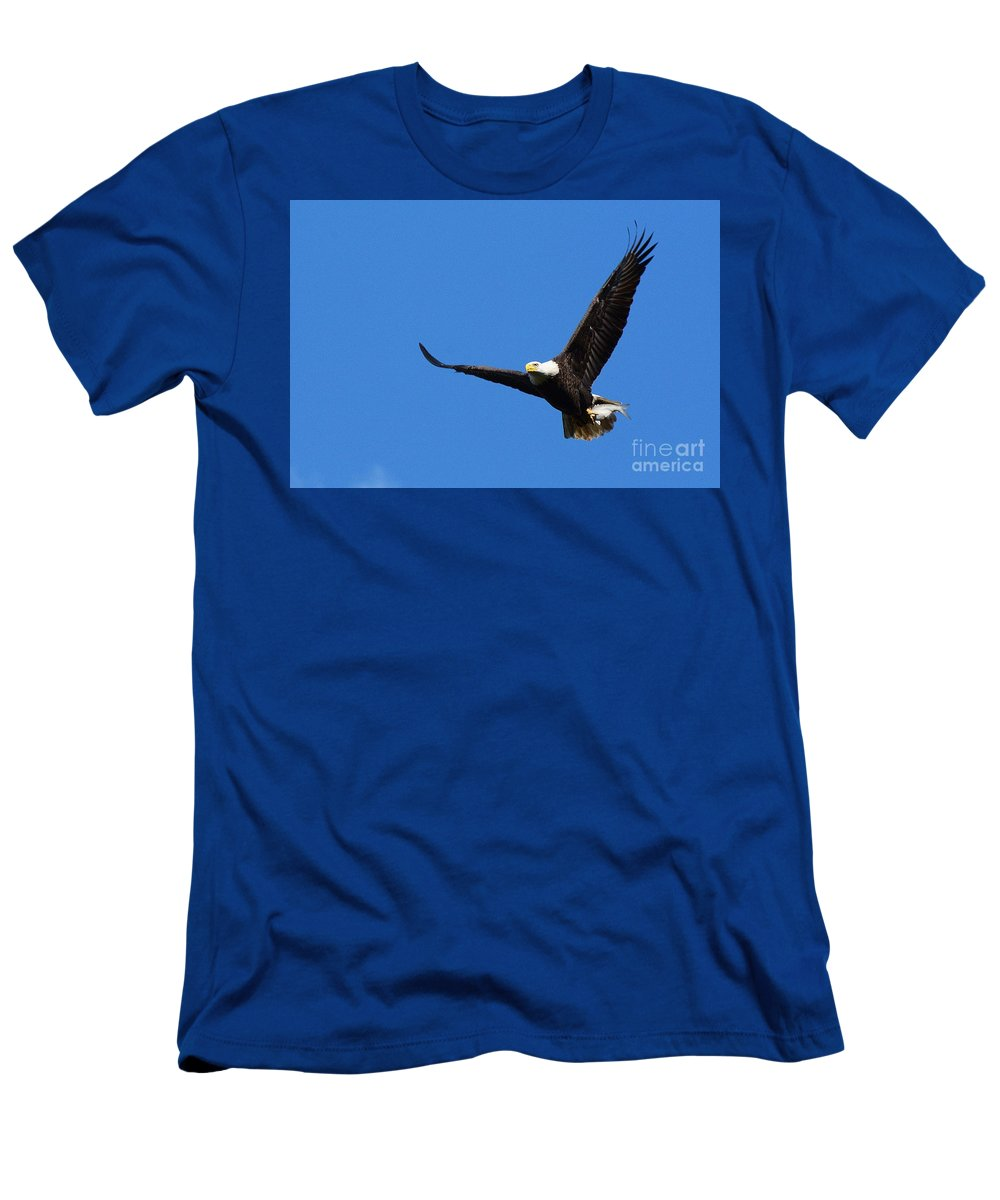 Eagle Men's T-Shirt (Athletic Fit) featuring the photograph American Splendor by Cindy Manero
