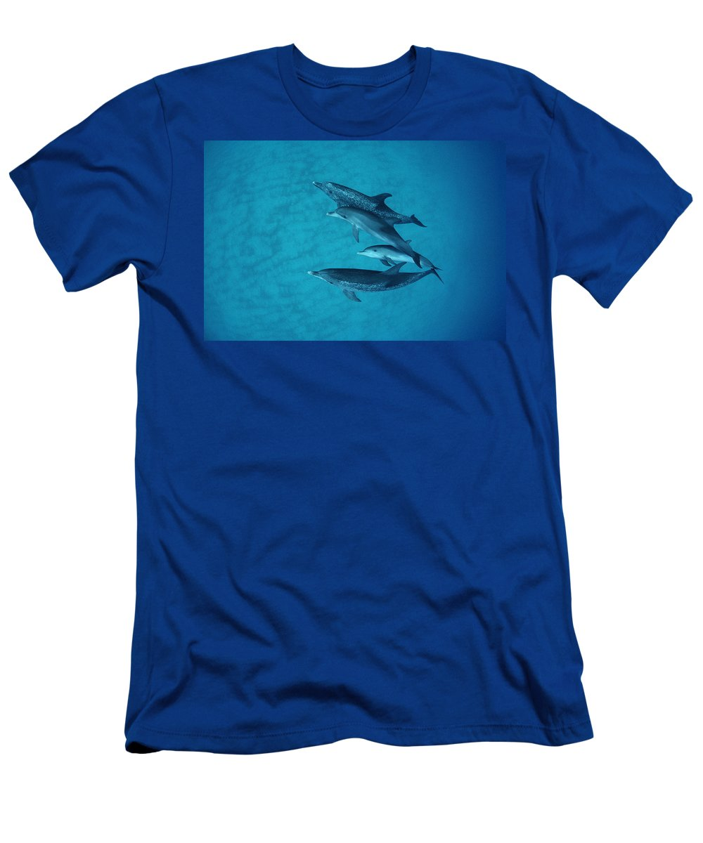 Feb0514 Men's T-Shirt (Athletic Fit) featuring the photograph Atlantic Spotted Dolphin Adults by Flip Nicklin