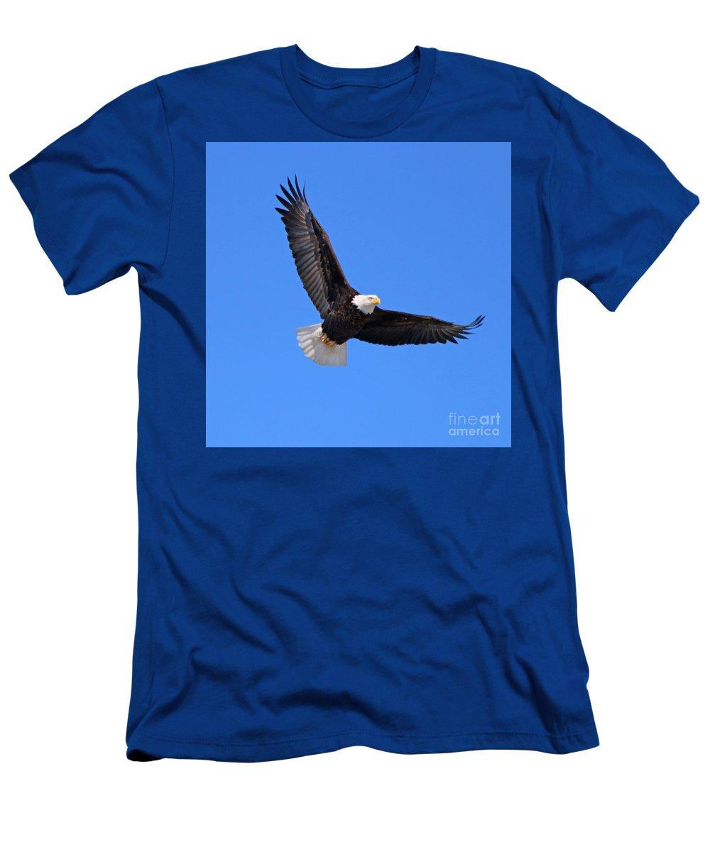 Bald Eagle Men's T-Shirt (Athletic Fit) featuring the photograph Bald Eagle 3773 by Jack Schultz