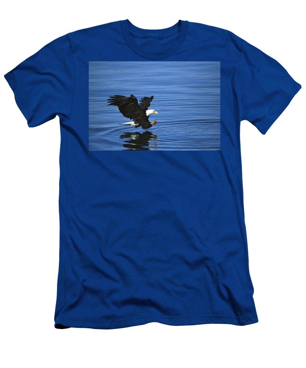 Feb0514 Men's T-Shirt (Athletic Fit) featuring the photograph Bald Eagle Striking Kenai Peninsula by Tom Vezo