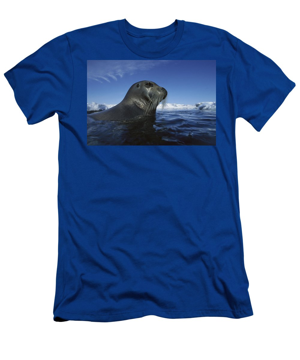 Feb0514 Men's T-Shirt (Athletic Fit) featuring the photograph Bearded Seal Surfacing Svalbard Norway by Flip Nicklin
